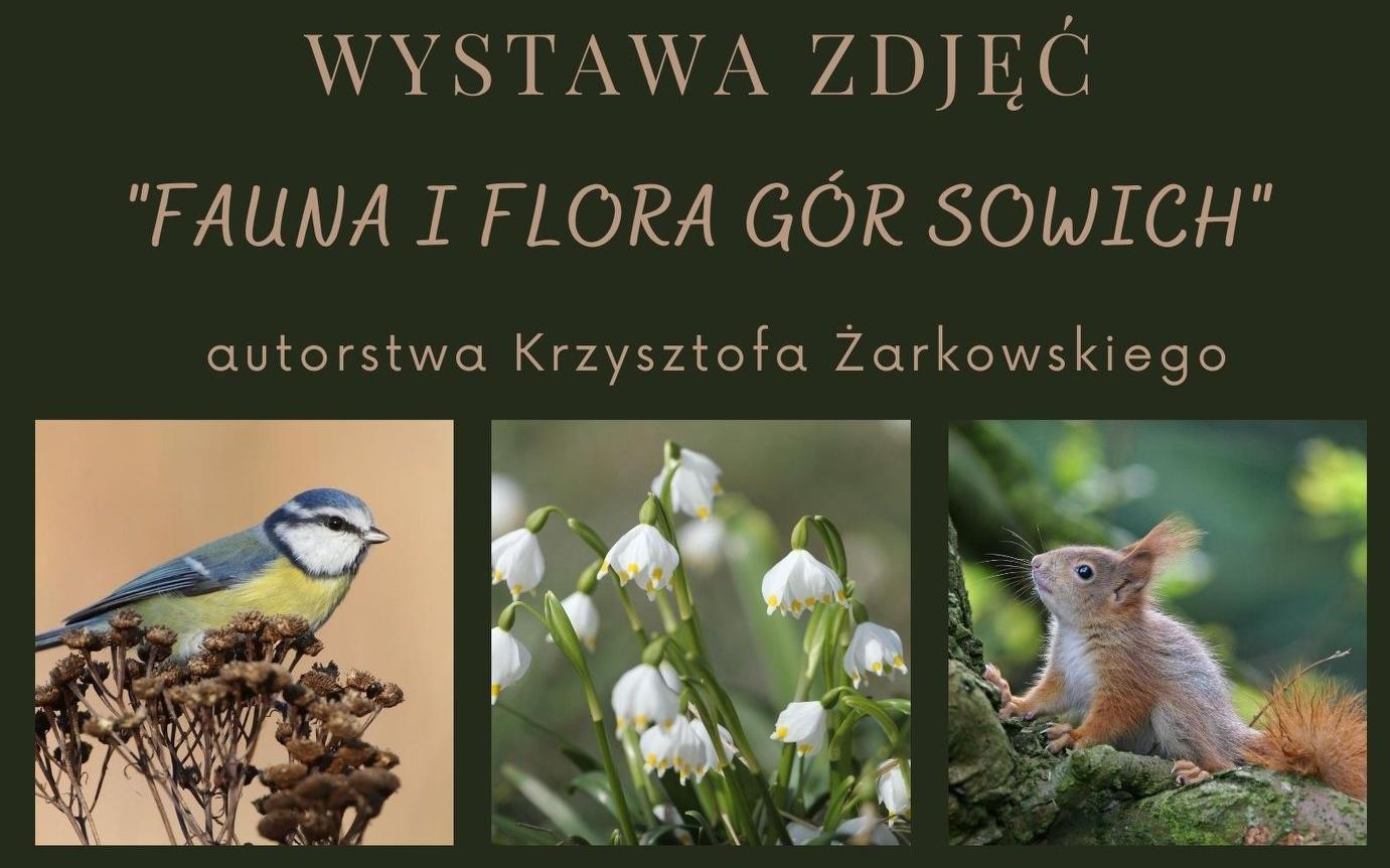 Fauna i flora Gór Sowich na fotografii.